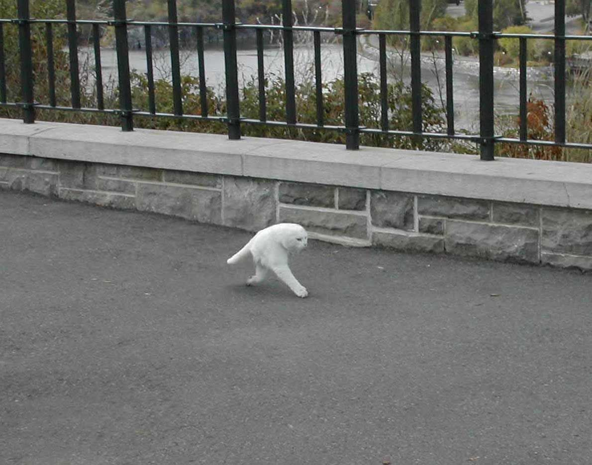 Two Legged Cat!  Straight Up Lolz  Pinterest