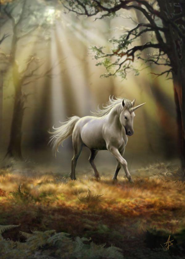 Unicorn Fairies Fantasy Angels