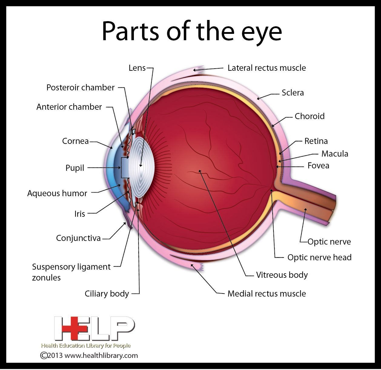 parts of the eye diagram and function 7 wire share