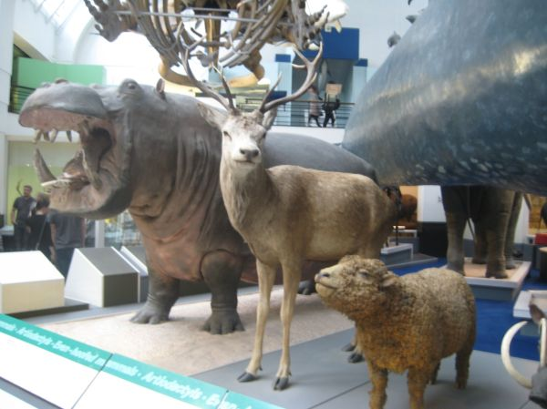 Animals National History Museum London