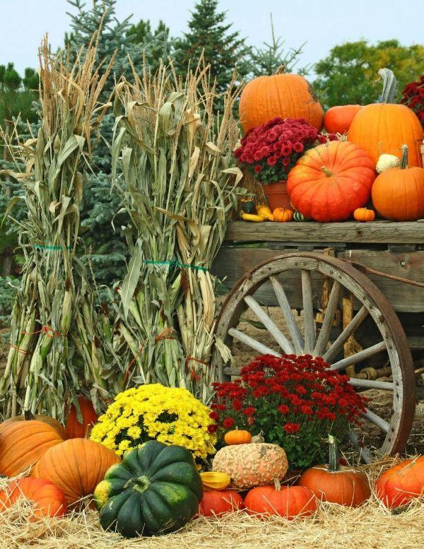 fall harvest related keywords &
