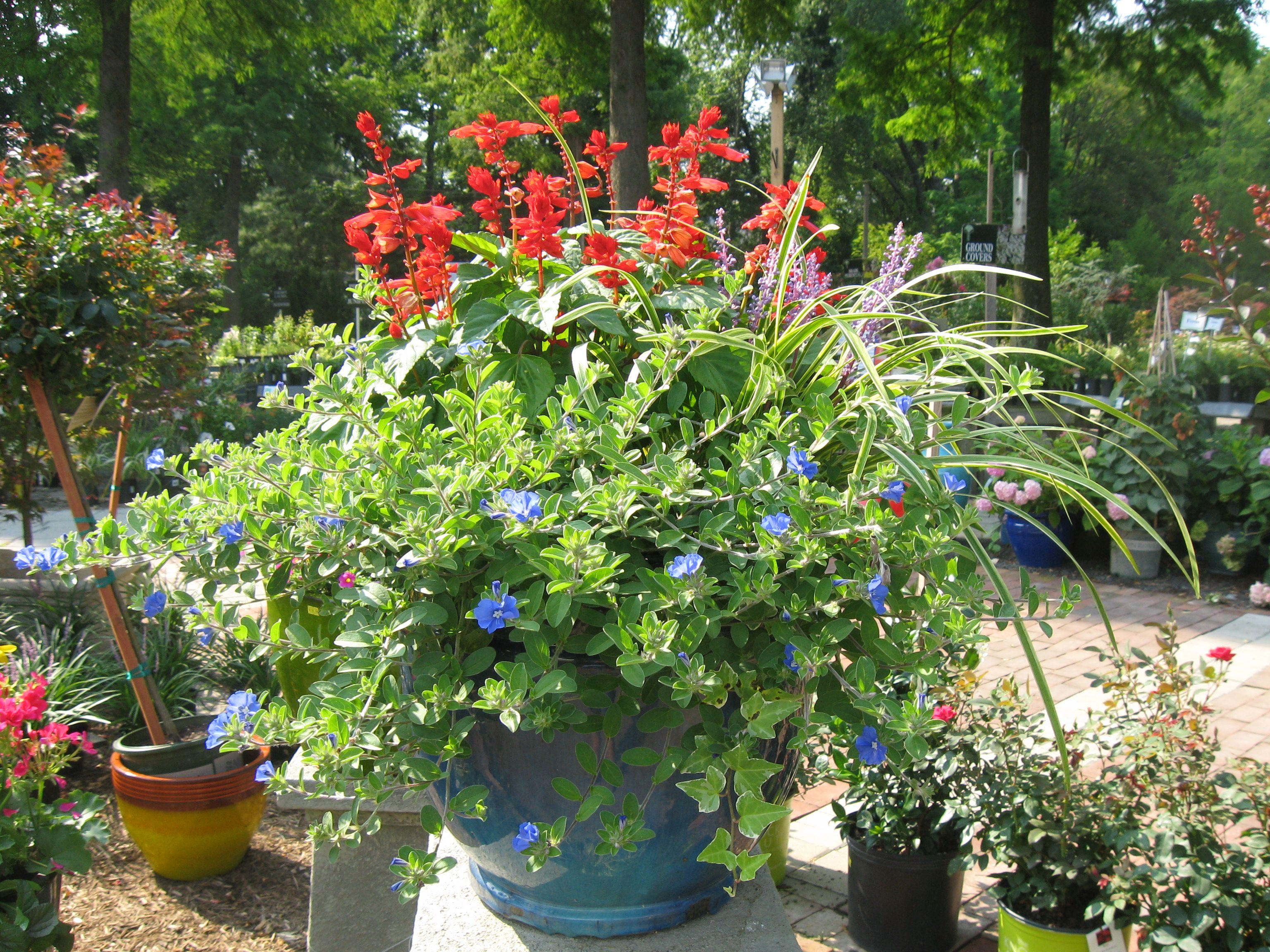 Full Sun Container Garden Ideas Photograph  Full Sun Contai