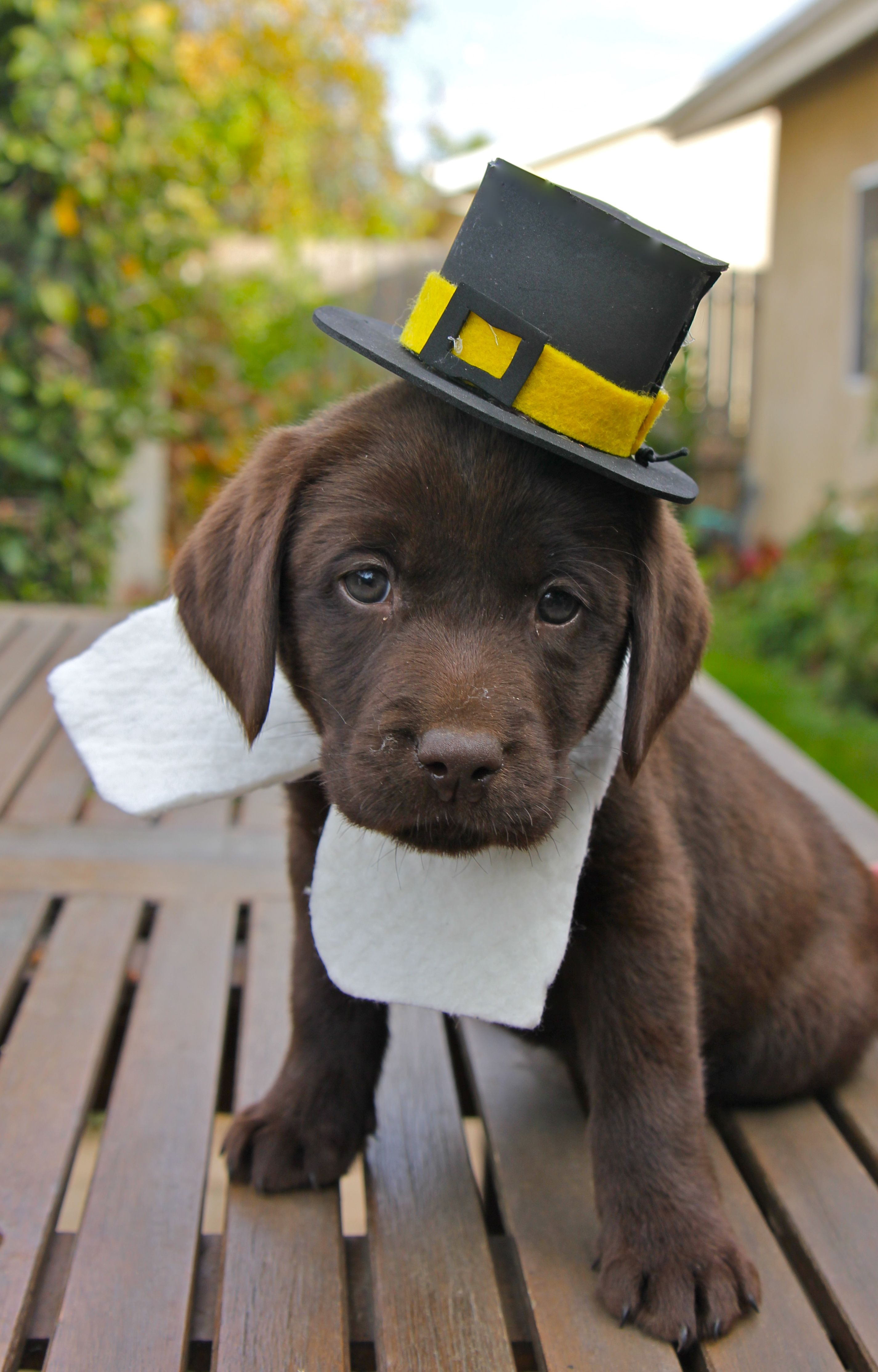 Happy Thanksgiving everyone!!! Puppies Pinterest
