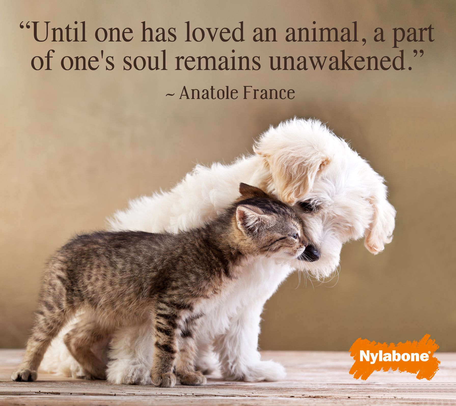 Pets bring unconditional love! Favorite Quotes Pinterest