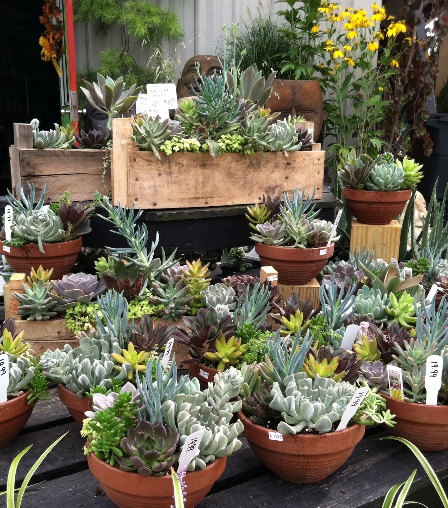 Succulent plant display