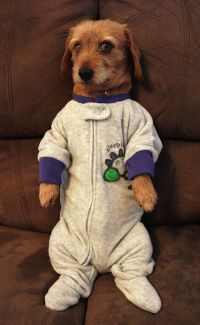 Pin by Ragamuffin Lane on Dogs In Clothes | Pinterest