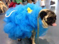 Pug Loofah Dog Costume | halloween costumes | Pinterest