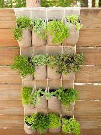 Herbs: Natures Ultimate Multi-Taskers | Badger Ridge ...
