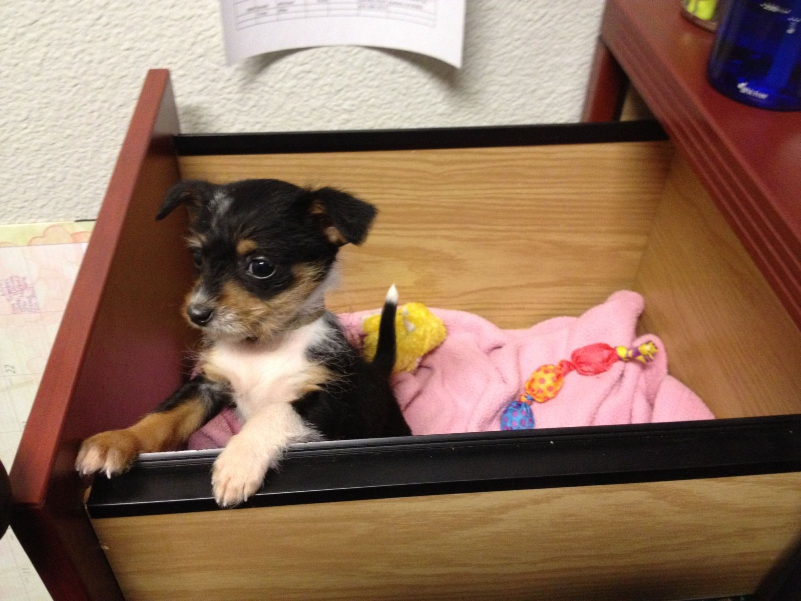 Puppy up for adoption at Petsmart cutest animals ever