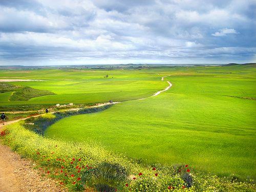 Camino de Santiago Fields of Green