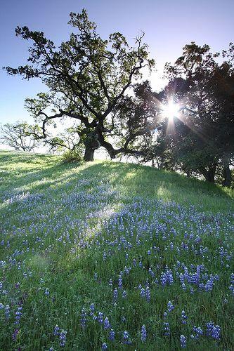 Springtime morning