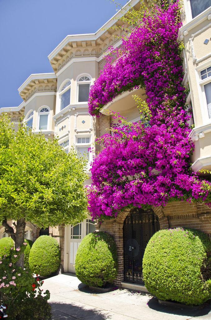Fiore balcone, San Francisco