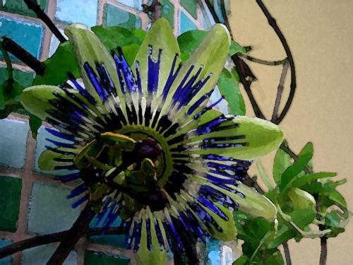 ...ci riprovo con la passiflora... http://giardinoindiretta.blogspot.com/2011/08/ci-riprovo-con-la-passiflora.html