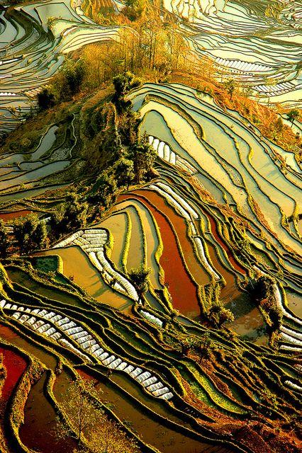 Yuanyang terrazze di riso Yunnan, Cina