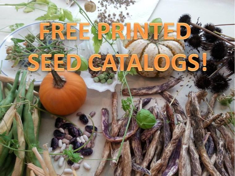 Headline for List of FREE Printed Seed Catalogs: Looking for hope and joy in winter.