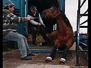 """Waldek N - """"Pieśń o koniu"""""""