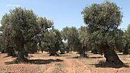 El Escarabajo Verde - Plagas de importación, El escarabajo verde - RTVE.es A la Carta