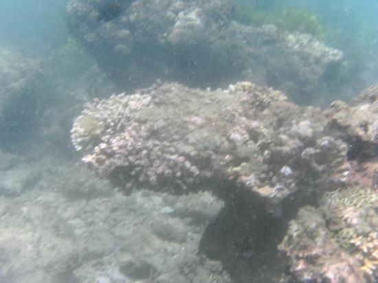 Bali Marine Walk: PICT0471