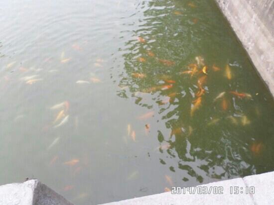 The GuangYing Statue - Picture of Dongguan Yinxian Resort - TripAdvisor