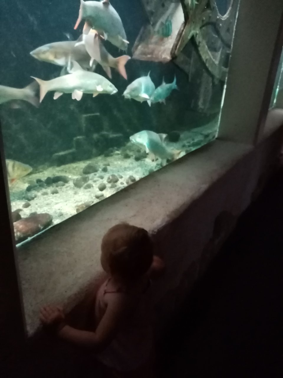 Plus Grand Aquarium De France : grand, aquarium, france, Grand, Aquarium, Touraine, (Lussault-sur-Loire), Qu'il, Savoir, Votre, Visite, Tripadvisor