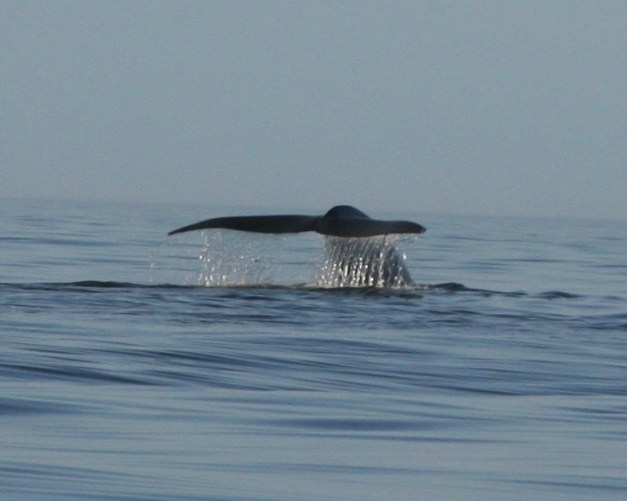 Whale Research EcoExcursions