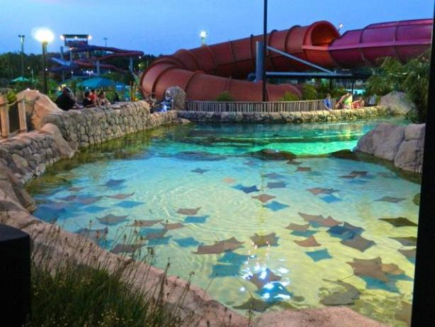 Family members Vacation Packages & Hotel Bundles At SeaWorld San Antonio Texas