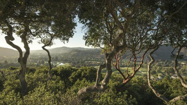 """Forêt avec de beaux troncs d'arbres au premier plan """"width ="""" 1024 """"height ="""" 576"""