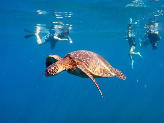 Kauai Sea Rider Tours de snorkel y avistamiento de ballenas