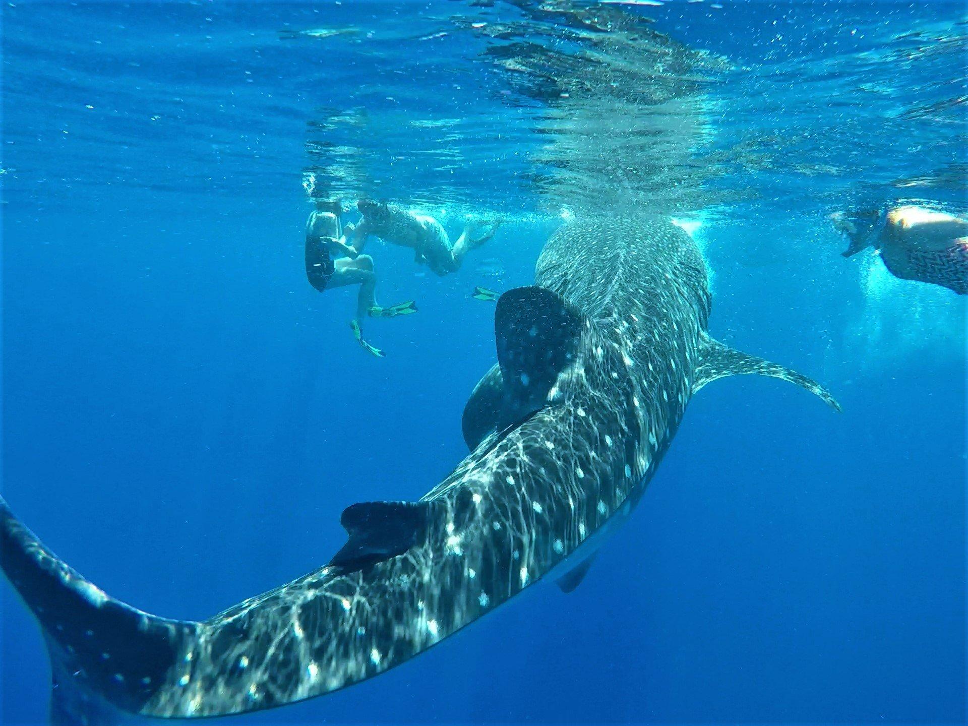 Into The Blue - Kona Snorkel Adventures