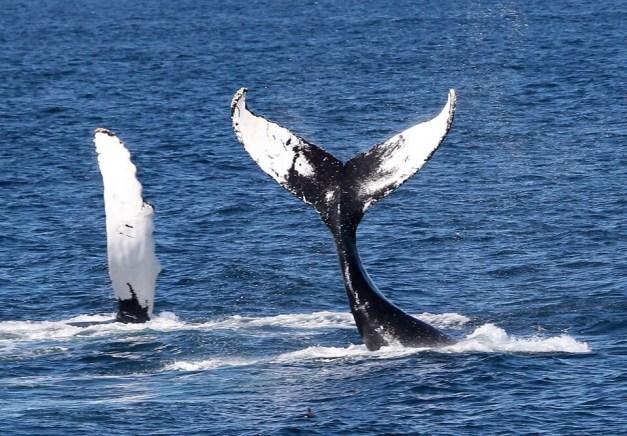 Bar Harbor Whale Watch Company