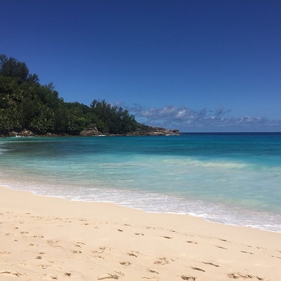 Seychelles Yellow Petals Prices Lodge Reviews Mahe