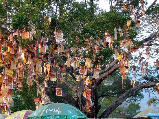 wish tree hong kong asie arbre de voeux lam tsuen