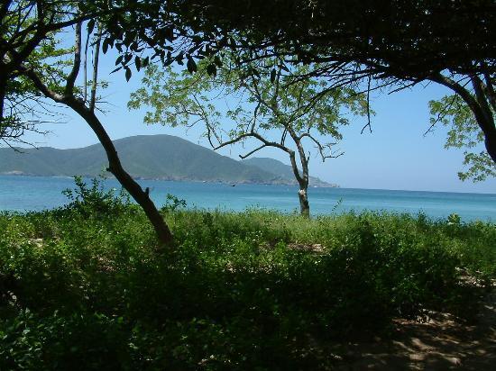 imagen manglares