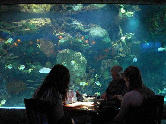 Downtown Aquarium Houston Tx Website