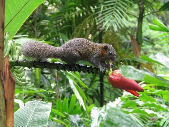 squirrel type animals in