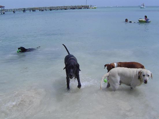 Dog Beach Key West FL Address Attraction Reviews  TripAdvisor