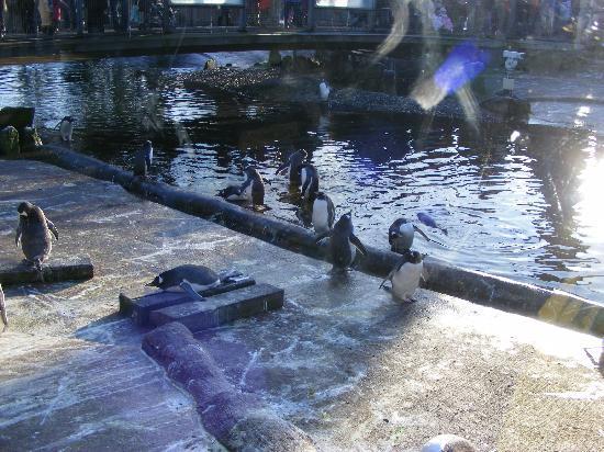 Photos of Edinburgh Zoo, Edinburgh
