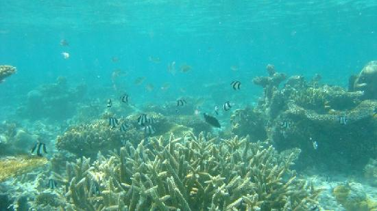 The resort has its own area of reef for SCUBA and snorkelling that is preserved by the hotel
