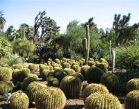 Part of the desert themed garden - Picture of The ...