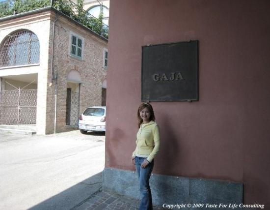 Gaja Winery  Gaja   Picture of Barbaresco Province of