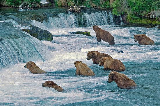 Park Tours National Katmai