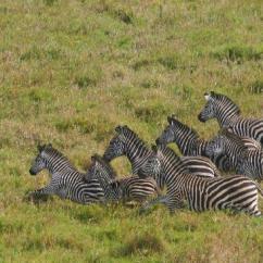 Sofala Safari Wall Mounted Sofa Bed Gorongosa National Park Photos - Featured Images Of ...