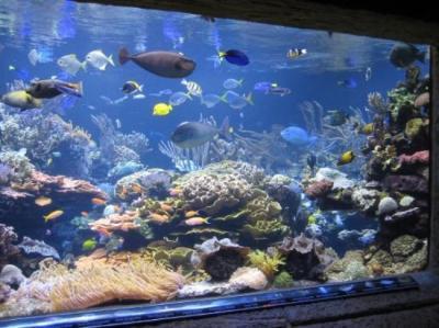 Atlantis Marine World - Picture of Long Island Aquarium ...