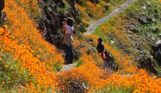 yosemite national park vacations