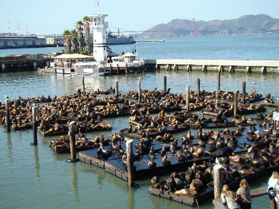 Seafood Restaurants Fishermans Wharf