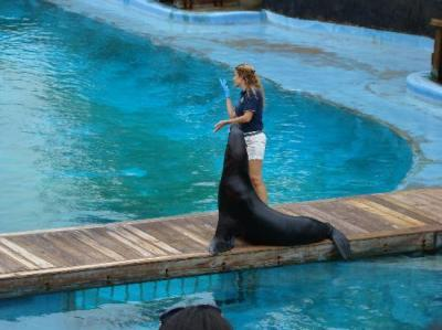 Sea Lion show at New York Aquarium - Picture of New York ...