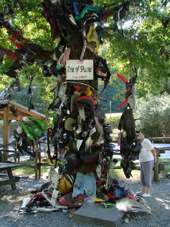 Tree of Shame with wrecked bike parts from The Dragon