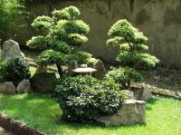 A tiny Japanese garden in florence - Picture of Orto ...