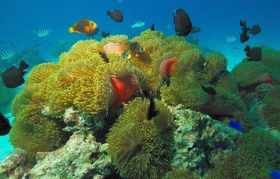 le guide montre les points particuliers fotografa de Aquabike Adventure Bora Bora  TripAdvisor
