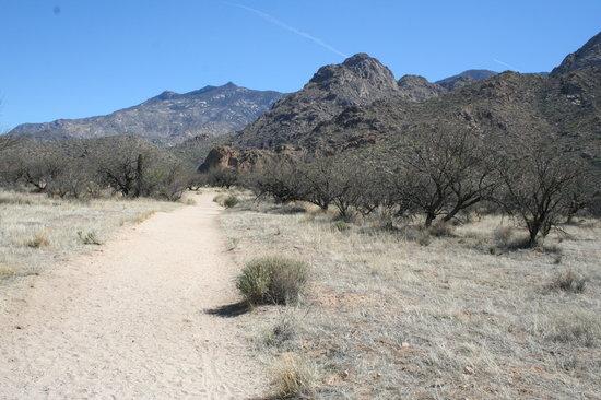 Catalina State Park Tucson AZ Address Phone Number Attraction Reviews  TripAdvisor